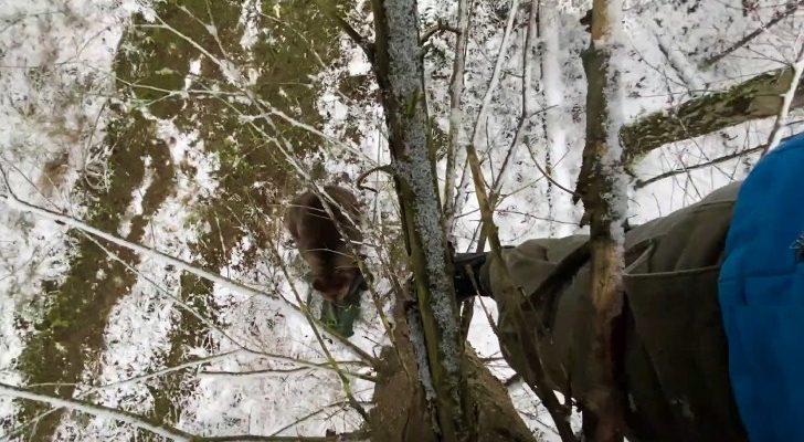 Медведь напал на блогеров в Чернобыле
