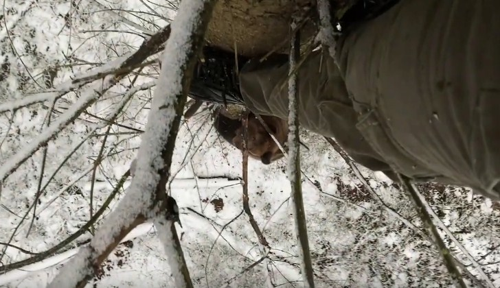Видео нападение медведя на блогеров в ЧЗО